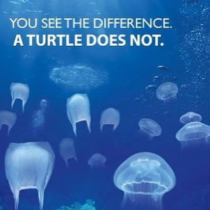 plastic-bags-in-the-ocean-look-just-like-the-jellyfish-that-sea-turtles-eat-and-they-cant-tell-the-d_large